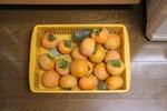 061027柿