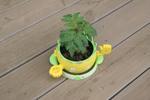 ミニトマト鉢で育てている様子