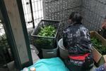 葉っぱを洗う