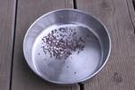 061022コカブ播種
