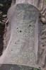 061104カブの発芽