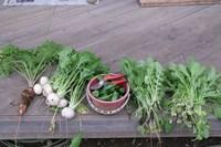 061123収穫IMG_3207.jpg