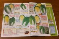 070315白菜のカタログP1000037.jpg
